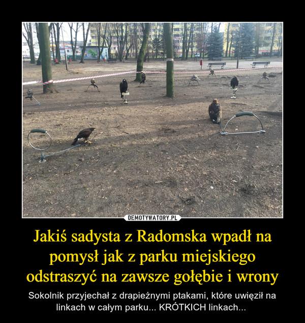 Jakiś sadysta z Radomska wpadł na pomysł jak z parku miejskiego odstraszyć na zawsze gołębie i wrony – Sokolnik przyjechał z drapieżnymi ptakami, które uwięził na linkach w całym parku... KRÓTKICH linkach...