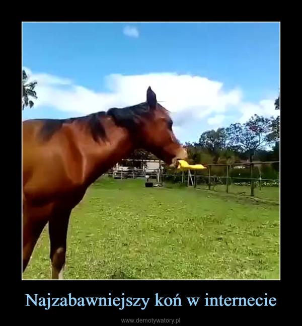 Najzabawniejszy koń w internecie –
