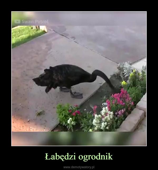 Łabędzi ogrodnik –