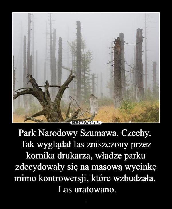 Park Narodowy Szumawa, Czechy. Tak wyglądał las zniszczony przez kornika drukarza, władze parku zdecydowały się na masową wycinkę mimo kontrowersji, które wzbudzała.  Las uratowano. – .