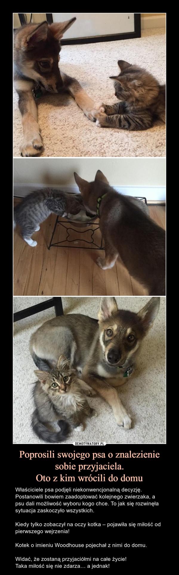 Poprosili swojego psa o znalezienie sobie przyjaciela.Oto z kim wrócili do domu – Właściciele psa podjęli niekonwencjonalną decyzję. Postanowili bowiem zaadoptować kolejnego zwierzaka, a psu dali możliwość wyboru kogo chce. To jak się rozwinęła sytuacja zaskoczyło wszystkich.Kiedy tylko zobaczył na oczy kotka – pojawiła się miłość od pierwszego wejrzenia!Kotek o imieniu Woodhouse pojechał z nimi do domu.Widać, że zostaną przyjaciółmi na całe życie!Taka miłość się nie zdarza… a jednak!