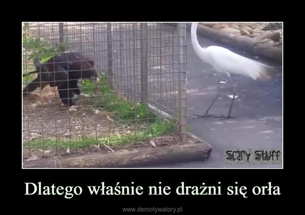 Dlatego właśnie nie drażni się orła –
