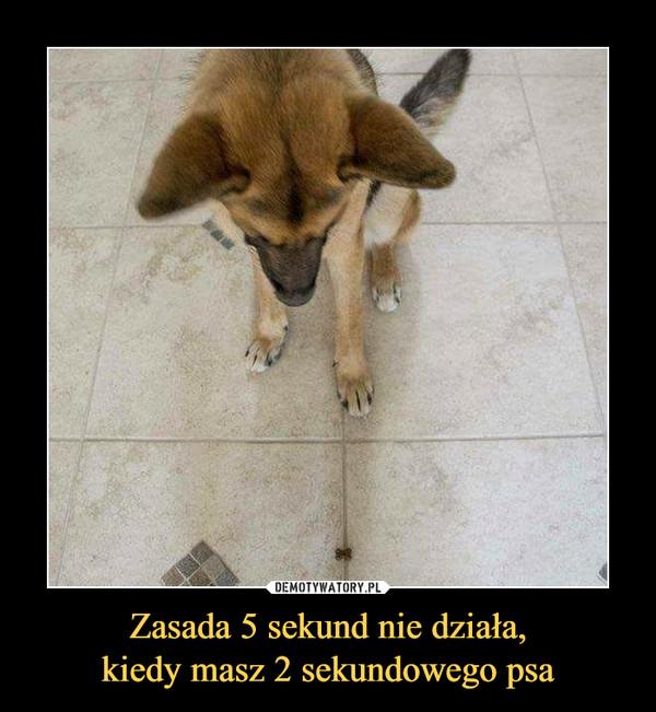 Zasada 5 sekund nie działa,kiedy masz 2 sekundowego psa –