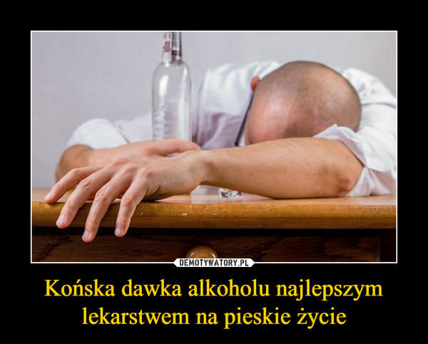Końska dawka alkoholu najlepszym lekarstwem na pieskie życie –
