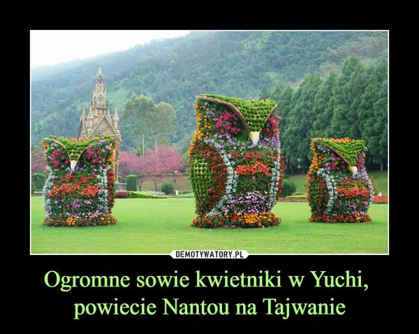 Ogromne sowie kwietniki w Yuchi, powiecie Nantou na Tajwanie –