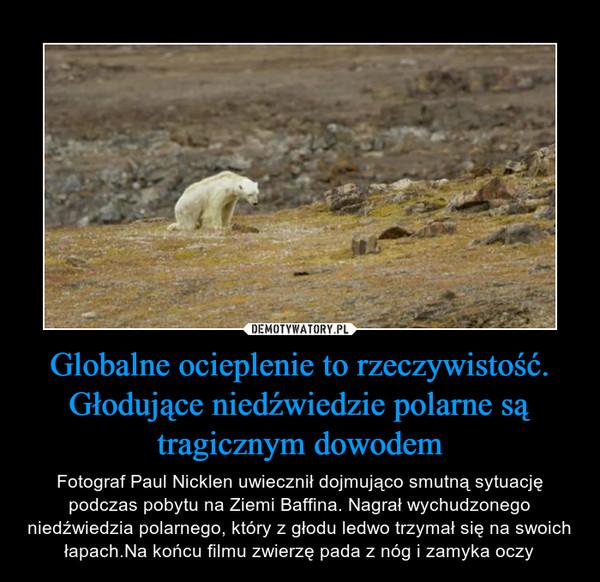 Globalne ocieplenie to rzeczywistość. Głodujące niedźwiedzie polarne są tragicznym dowodem – Fotograf Paul Nicklen uwiecznił dojmująco smutną sytuację podczas pobytu na Ziemi Baffina. Nagrał wychudzonego niedźwiedzia polarnego, który z głodu ledwo trzymał się na swoich łapach.Na końcu filmu zwierzę pada z nóg i zamyka oczy