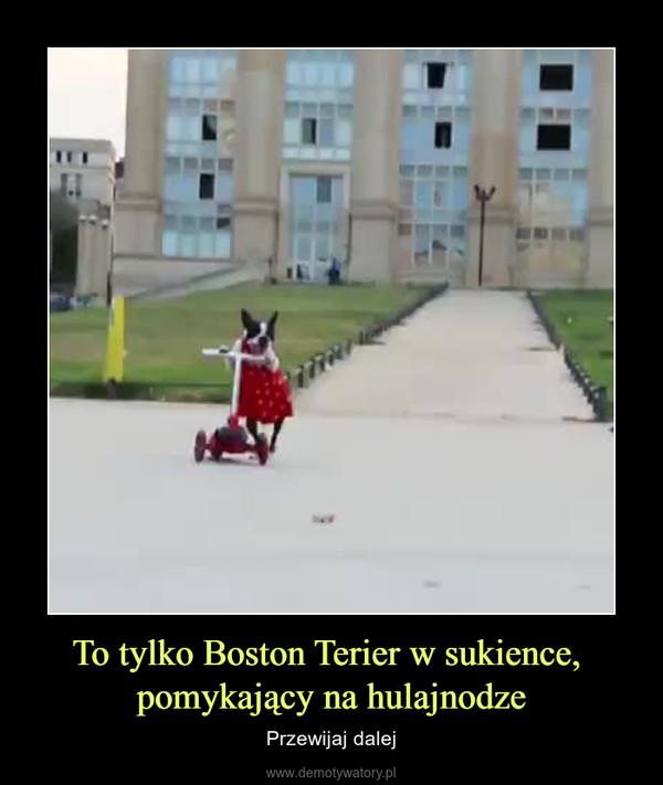 To tylko Boston Terier w sukience, pomykający na hulajnodze – Przewijaj dalej