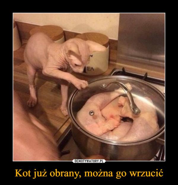 Kot już obrany, można go wrzucić –