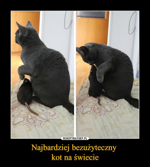 Najbardziej bezużyteczny  kot na świecie