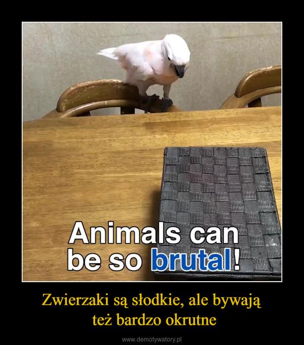 Zwierzaki są słodkie, ale bywają też bardzo okrutne –