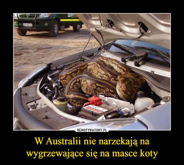 W Australii nie narzekają na wygrzewające się na masce koty –