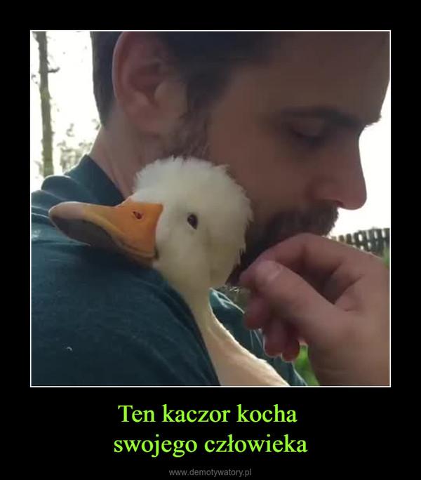 Ten kaczor kocha swojego człowieka –