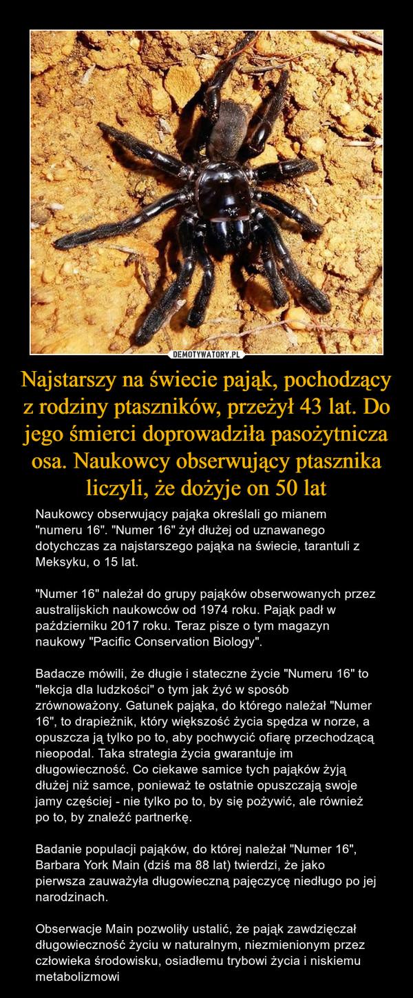 """Najstarszy na świecie pająk, pochodzący z rodziny ptaszników, przeżył 43 lat. Do jego śmierci doprowadziła pasożytnicza osa. Naukowcy obserwujący ptasznika liczyli, że dożyje on 50 lat – Naukowcy obserwujący pająka określali go mianem """"numeru 16"""". """"Numer 16"""" żył dłużej od uznawanego dotychczas za najstarszego pająka na świecie, tarantuli z Meksyku, o 15 lat.""""Numer 16"""" należał do grupy pająków obserwowanych przez australijskich naukowców od 1974 roku. Pająk padł w październiku 2017 roku. Teraz pisze o tym magazyn naukowy """"Pacific Conservation Biology"""".Badacze mówili, że długie i stateczne życie """"Numeru 16"""" to """"lekcja dla ludzkości"""" o tym jak żyć w sposób zrównoważony. Gatunek pająka, do którego należał """"Numer 16"""", to drapieżnik, który większość życia spędza w norze, a opuszcza ją tylko po to, aby pochwycić ofiarę przechodzącą nieopodal. Taka strategia życia gwarantuje im długowieczność. Co ciekawe samice tych pająków żyją dłużej niż samce, ponieważ te ostatnie opuszczają swoje jamy częściej - nie tylko po to, by się pożywić, ale również po to, by znaleźć partnerkę.Badanie populacji pająków, do której należał """"Numer 16"""", Barbara York Main (dziś ma 88 lat) twierdzi, że jako pierwsza zauważyła długowieczną pajęczycę niedługo po jej narodzinach.Obserwacje Main pozwoliły ustalić, że pająk zawdzięczał długowieczność życiu w naturalnym, niezmienionym przez człowieka środowisku, osiadłemu trybowi życia i niskiemu metabolizmowi"""