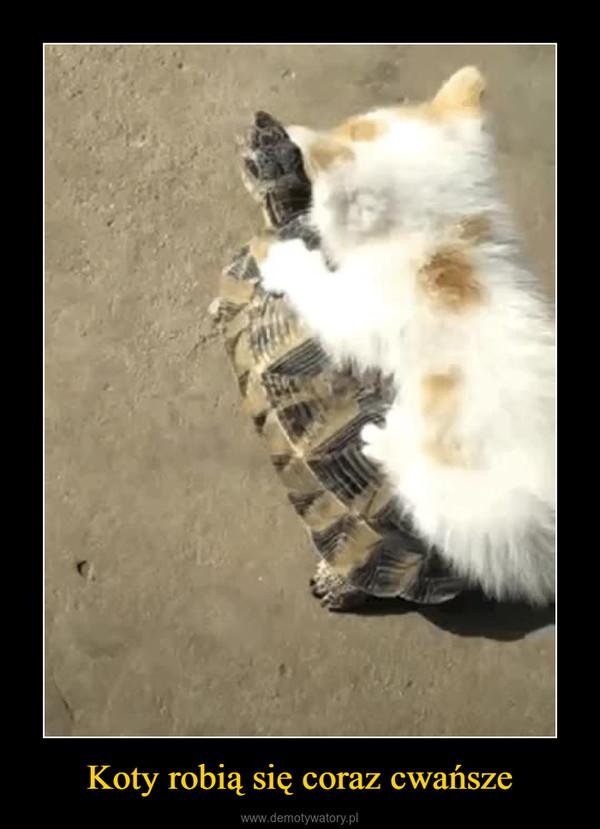 Koty robią się coraz cwańsze –