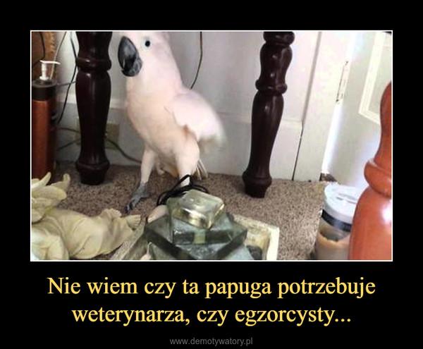 Nie wiem czy ta papuga potrzebuje weterynarza, czy egzorcysty... –