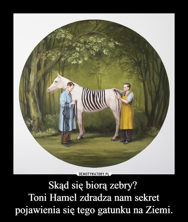 Skąd się biorą zebry? Toni Hamel zdradza nam sekret pojawienia się tego gatunku na Ziemi. –