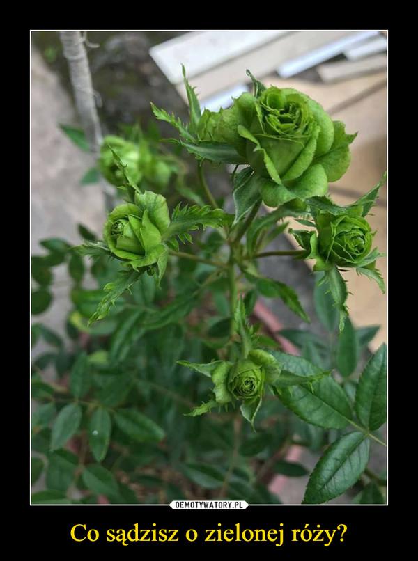 Co sądzisz o zielonej róży? –
