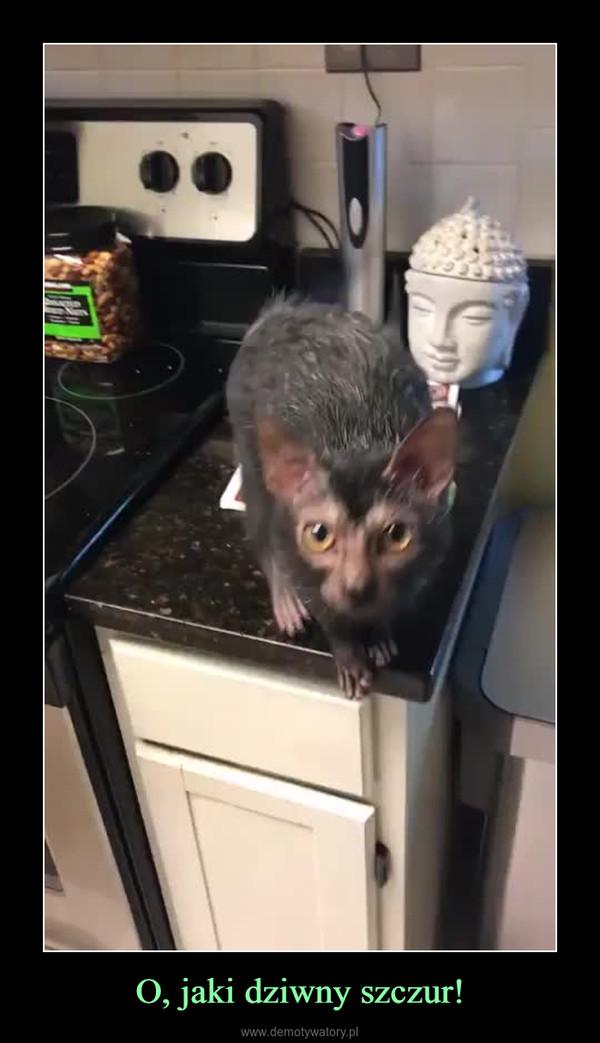 O, jaki dziwny szczur! –