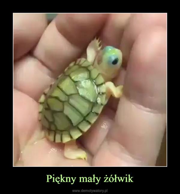 Piękny mały żółwik –