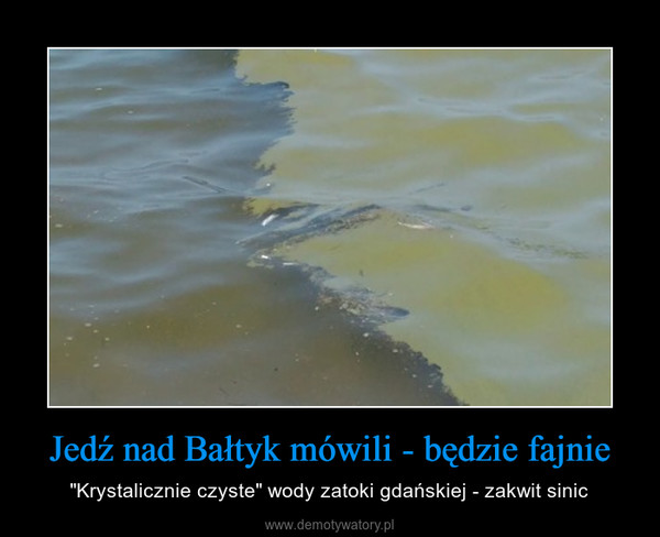"""Jedź nad Bałtyk mówili - będzie fajnie – """"Krystalicznie czyste"""" wody zatoki gdańskiej - zakwit sinic"""