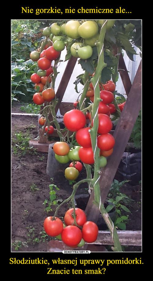 Nie gorzkie, nie chemiczne ale... Słodziutkie, własnej uprawy pomidorki. Znacie ten smak?