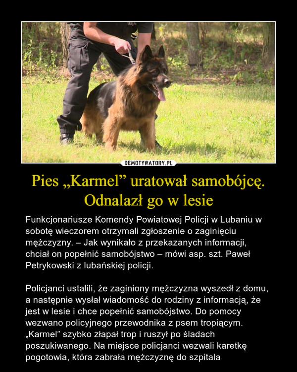 """Pies """"Karmel"""" uratował samobójcę. Odnalazł go w lesie – Funkcjonariusze Komendy Powiatowej Policji w Lubaniu w sobotę wieczorem otrzymali zgłoszenie o zaginięciu mężczyzny. – Jak wynikało z przekazanych informacji, chciał on popełnić samobójstwo – mówi asp. szt. Paweł Petrykowski z lubańskiej policji.Policjanci ustalili, że zaginiony mężczyzna wyszedł z domu, a następnie wysłał wiadomość do rodziny z informacją, że jest w lesie i chce popełnić samobójstwo. Do pomocy wezwano policyjnego przewodnika z psem tropiącym. """"Karmel"""" szybko złapał trop i ruszył po śladach poszukiwanego. Na miejsce policjanci wezwali karetkę pogotowia, która zabrała mężczyznę do szpitala"""