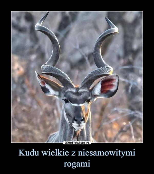 Kudu wielkie z niesamowitymi rogami –