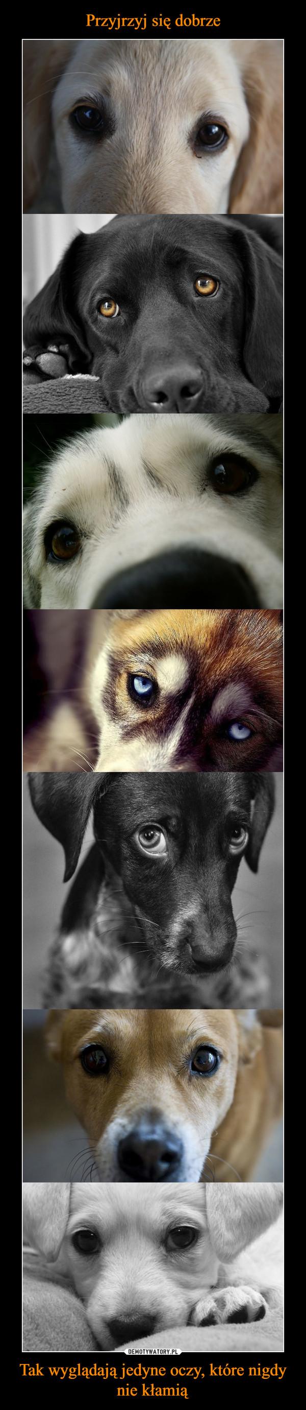 Tak wyglądają jedyne oczy, które nigdy nie kłamią –