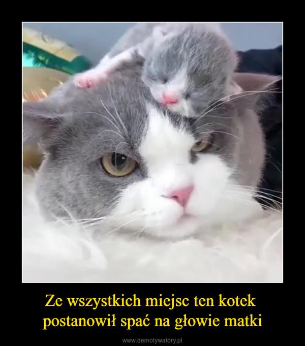 Ze wszystkich miejsc ten kotek postanowił spać na głowie matki –