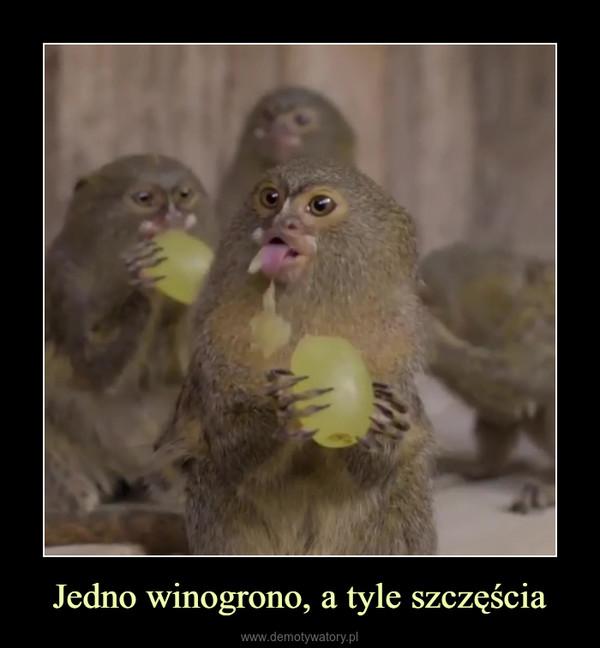 Jedno winogrono, a tyle szczęścia –