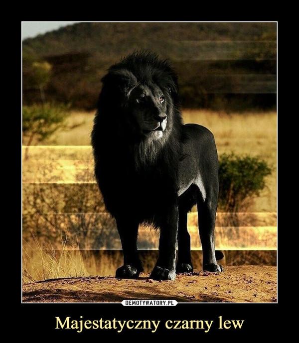 Majestatyczny czarny lew –