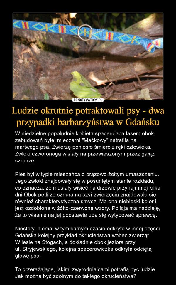 """Ludzie okrutnie potraktowali psy - dwa przypadki barbarzyństwa w Gdańsku – W niedzielne popołudnie kobieta spacerująca lasem obok zabudowań byłej mleczarni """"Maćkowy"""" natrafiła na martwego psa. Zwierzę poniosło śmierć z ręki człowieka. Zwłoki czworonoga wisiały na przewieszonym przez gałąź sznurze.Pies był w typie mieszańca o brązowo-żołtym umaszczeniu. Jego zwłoki znajdowały się w posuniętym stanie rozkładu, co oznacza, że musiały wisieć na drzewie przynajmniej kilka dni.Obok pętli ze sznura na szyi zwierzęcia znajdowała się również charakterystyczna smycz. Ma ona niebieski kolor i jest ozdobiona w żółto-czerwone wzory. Policja ma nadzieję, że to właśnie na jej podstawie uda się wytypować sprawcę.Niestety, niemal w tym samym czasie odkryto w innej części Gdańska kolejny przykład okrucieństwa wobec zwierząt. W lesie na Stogach, a dokładnie obok jeziora przyul. Stryjewskiego, kolejna spacerowiczka odkryła odciętą głowę psa.To przerażające, jakimi zwyrodnialcami potrafią być ludzie. Jak można być zdolnym do takiego okrucieństwa?"""