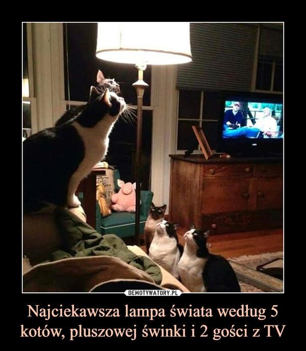 Najciekawsza lampa świata według 5 kotów, pluszowej świnki i 2 gości z TV –
