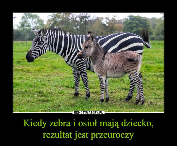Kiedy zebra i osioł mają dziecko, rezultat jest przeuroczy –