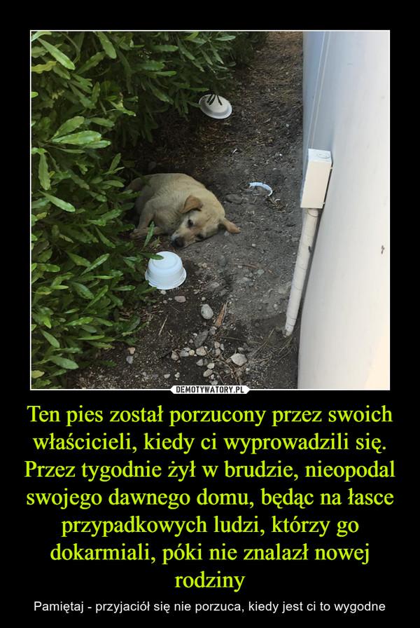 Ten pies został porzucony przez swoich właścicieli, kiedy ci wyprowadzili się. Przez tygodnie żył w brudzie, nieopodal swojego dawnego domu, będąc na łasce przypadkowych ludzi, którzy go dokarmiali, póki nie znalazł nowej rodziny – Pamiętaj - przyjaciół się nie porzuca, kiedy jest ci to wygodne