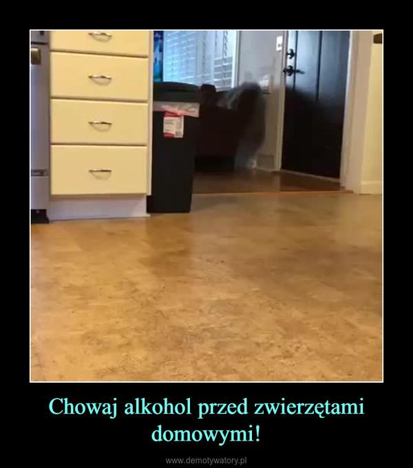 Chowaj alkohol przed zwierzętami domowymi! –