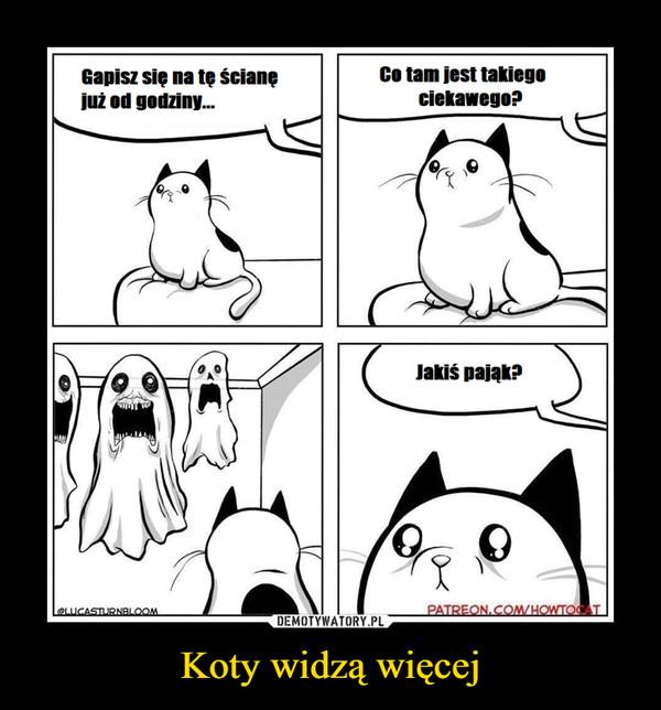 Koty widzą więcej –