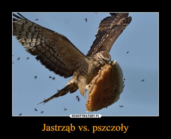 Jastrząb vs. pszczoły –