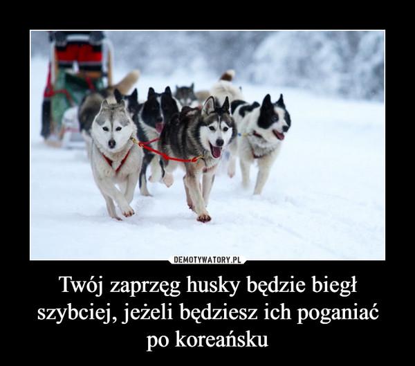 Twój zaprzęg husky będzie biegł szybciej, jeżeli będziesz ich poganiaćpo koreańsku –