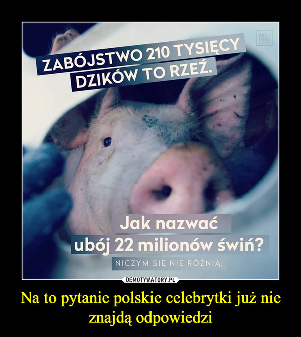 Na to pytanie polskie celebrytki już nie znajdą odpowiedzi –