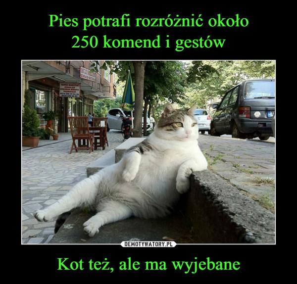 Kot też, ale ma wyjebane –