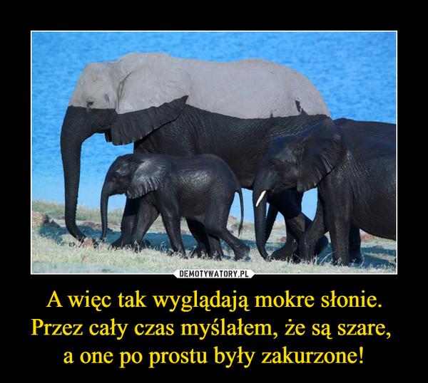 A więc tak wyglądają mokre słonie. Przez cały czas myślałem, że są szare, a one po prostu były zakurzone! –