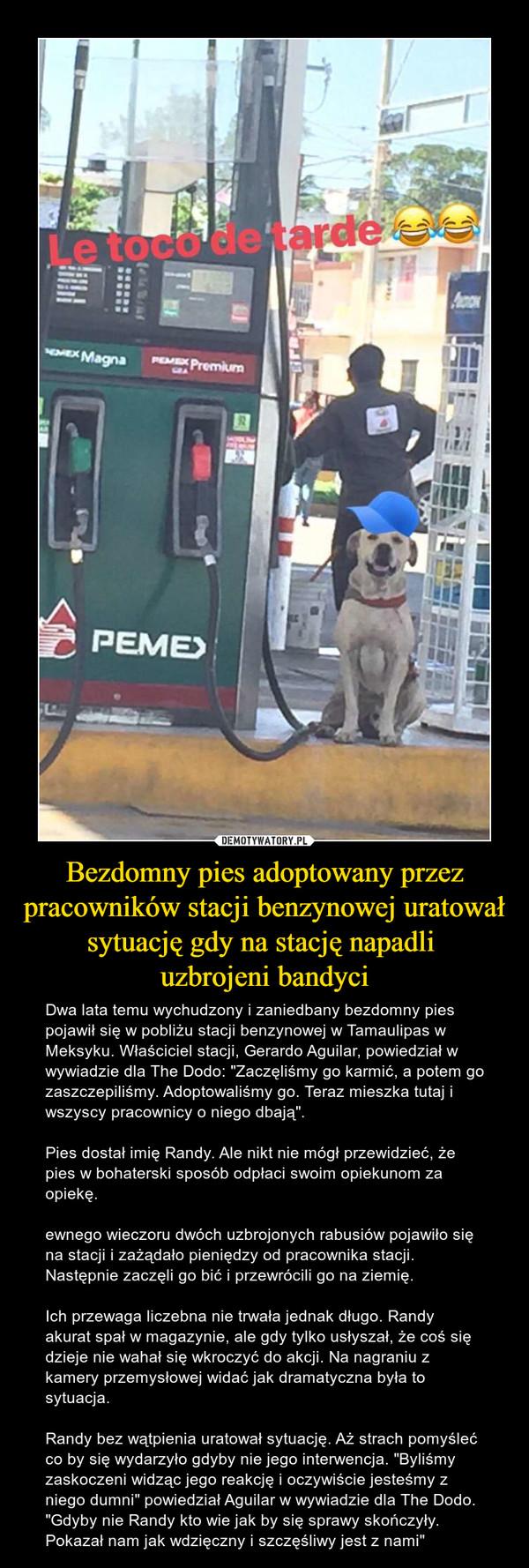 """Bezdomny pies adoptowany przez pracowników stacji benzynowej uratował sytuację gdy na stację napadli uzbrojeni bandyci – Dwa lata temu wychudzony i zaniedbany bezdomny pies pojawił się w pobliżu stacji benzynowej w Tamaulipas w Meksyku. Właściciel stacji, Gerardo Aguilar, powiedział w wywiadzie dla The Dodo: """"Zaczęliśmy go karmić, a potem go zaszczepiliśmy. Adoptowaliśmy go. Teraz mieszka tutaj i wszyscy pracownicy o niego dbają"""".Pies dostał imię Randy. Ale nikt nie mógł przewidzieć, że pies w bohaterski sposób odpłaci swoim opiekunom za opiekę.ewnego wieczoru dwóch uzbrojonych rabusiów pojawiło się na stacji i zażądało pieniędzy od pracownika stacji. Następnie zaczęli go bić i przewrócili go na ziemię.Ich przewaga liczebna nie trwała jednak długo. Randy akurat spał w magazynie, ale gdy tylko usłyszał, że coś się dzieje nie wahał się wkroczyć do akcji. Na nagraniu z kamery przemysłowej widać jak dramatyczna była to sytuacja.Randy bez wątpienia uratował sytuację. Aż strach pomyśleć co by się wydarzyło gdyby nie jego interwencja. """"Byliśmy zaskoczeni widząc jego reakcję i oczywiście jesteśmy z niego dumni"""" powiedział Aguilar w wywiadzie dla The Dodo. """"Gdyby nie Randy kto wie jak by się sprawy skończyły. Pokazał nam jak wdzięczny i szczęśliwy jest z nami"""""""