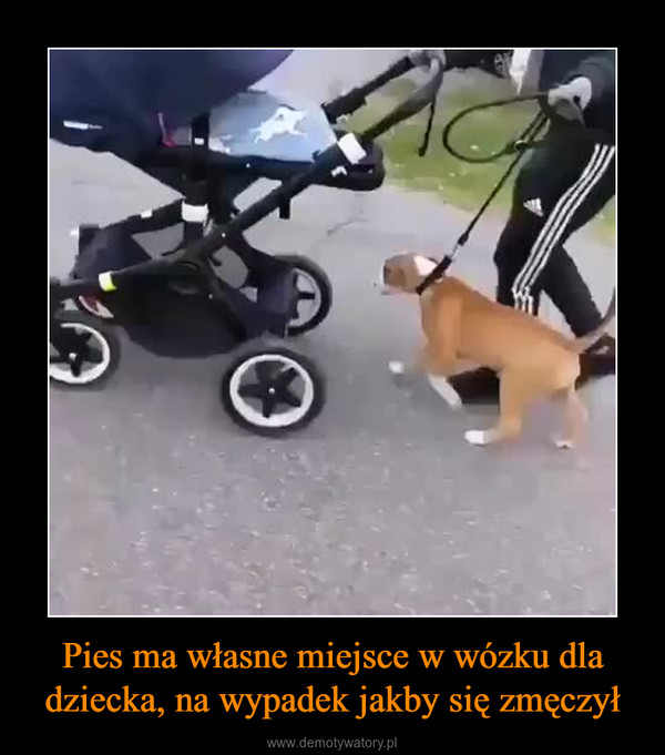 Pies ma własne miejsce w wózku dla dziecka, na wypadek jakby się zmęczył –