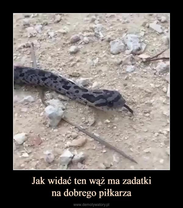 Jak widać ten wąż ma zadatkina dobrego piłkarza –
