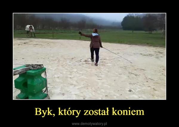 Byk, który został koniem –