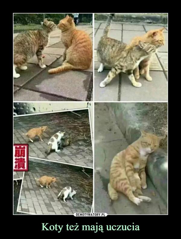 Koty też mają uczucia –