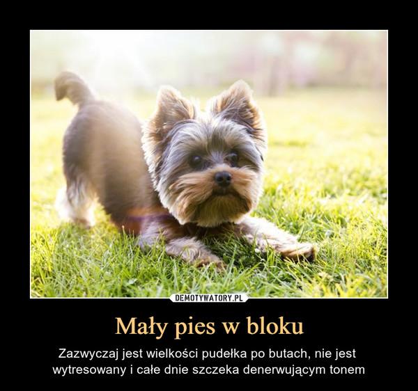 Mały pies w bloku – Zazwyczaj jest wielkości pudełka po butach, nie jest wytresowany i całe dnie szczeka denerwującym tonem
