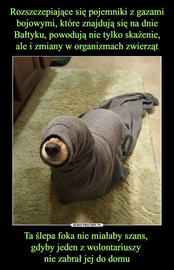 Ta ślepa foka nie miałaby szans, gdyby jeden z wolontariuszy nie zabrał jej do domu –