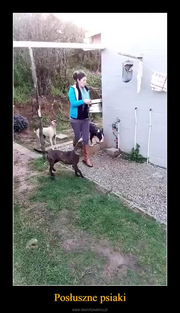 Posłuszne psiaki –